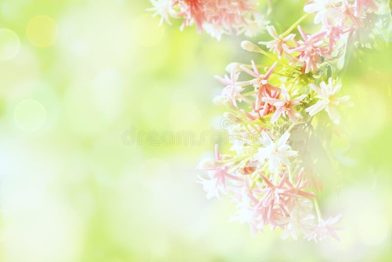 Flores rosados azules suaves de las flores en fondo verde del brillo del bokeh de las luces brillantes Para los productos de la n foto de archivo