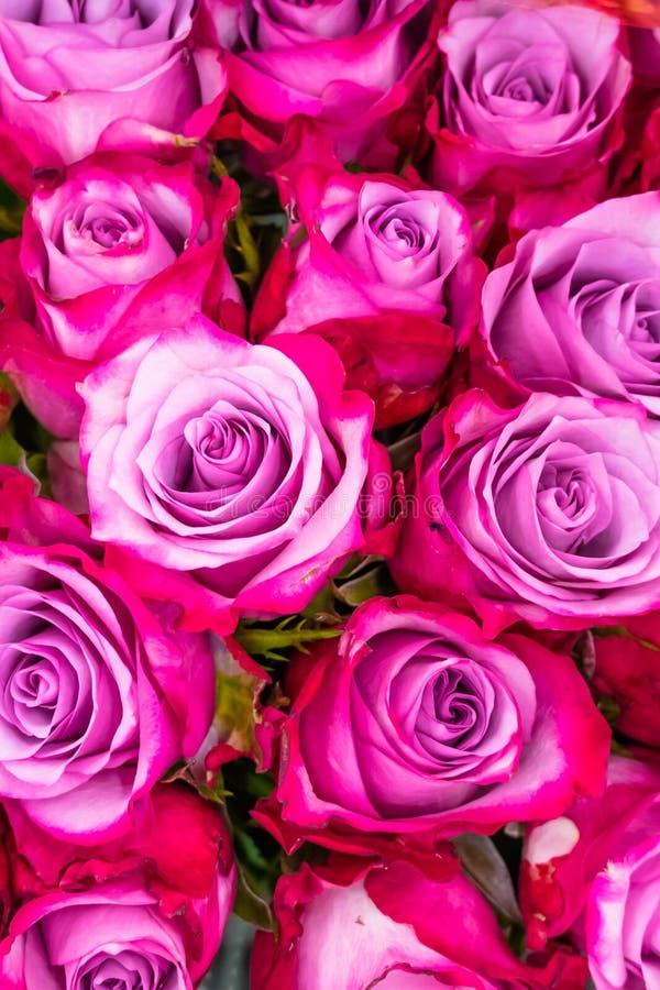 Flores, rosas rosadas fotos de archivo