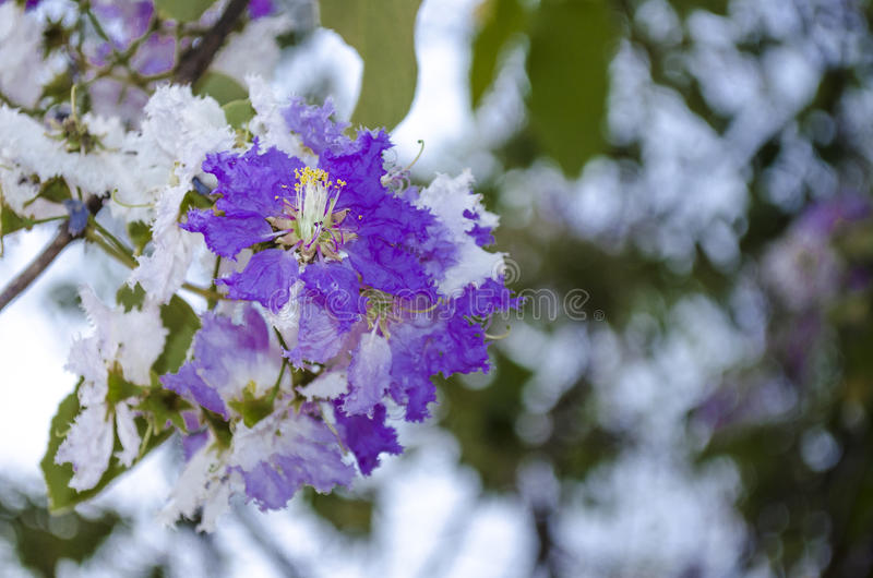 Flores roxas fotos de stock royalty free