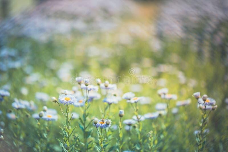 Flores roxas bonitas, fundo natural do verão, imagem borrada Conceito inspirado da natureza imagens de stock royalty free