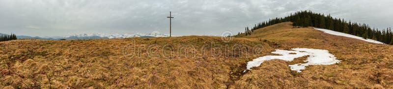 Flores roxas do açafrão na montanha da manhã da mola fotografia de stock
