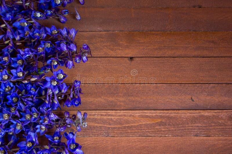 Flores roxas do Foxglove fotos de stock royalty free