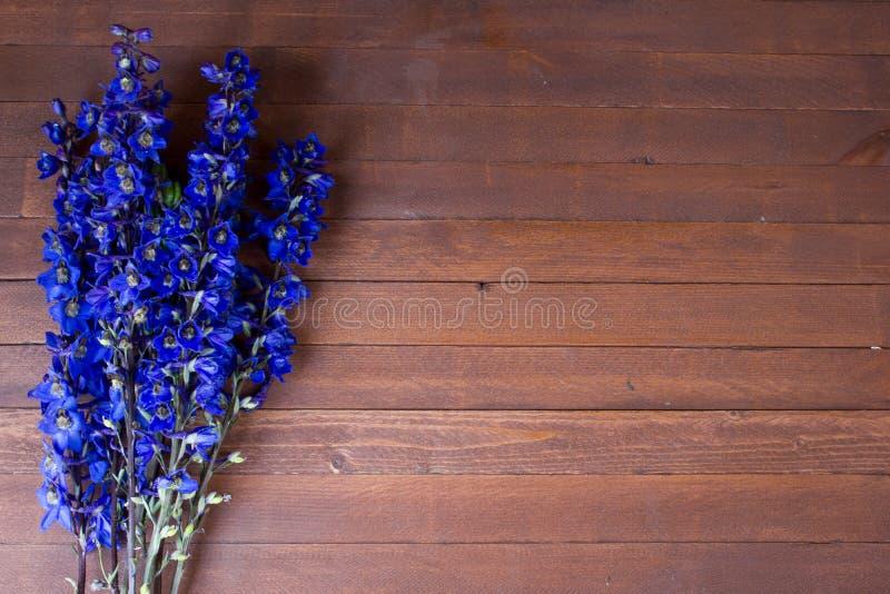 Flores roxas do Foxglove fotografia de stock royalty free