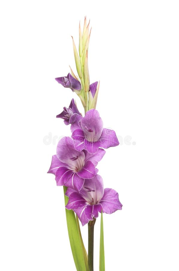 Flores roxas dos tipos de flor fotografia de stock
