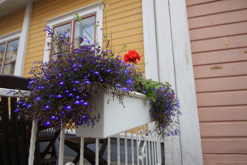Flores roxas em uma caixa na rua imagens de stock royalty free