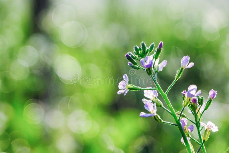 Flores roxas no borrado bonito verde e no bokeh fotografia de stock royalty free