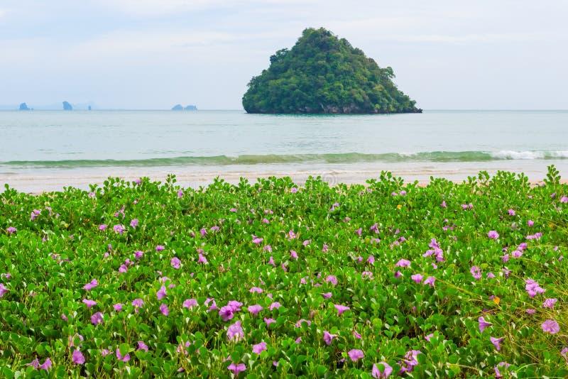 Flores roxas pequenas em um Sandy Beach nos trópicos foto de stock royalty free