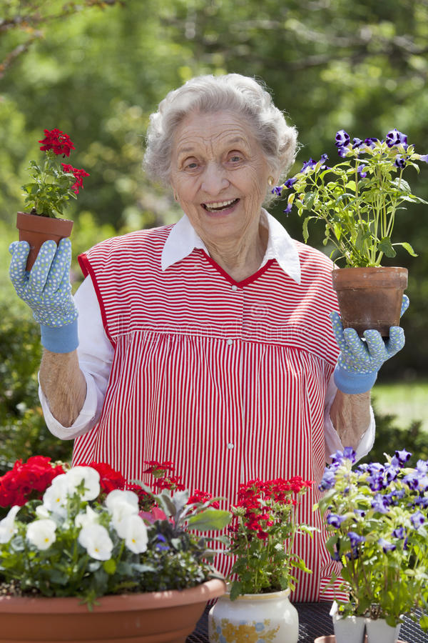 Flores sênior de sorriso da terra arrendada da mulher imagens de stock