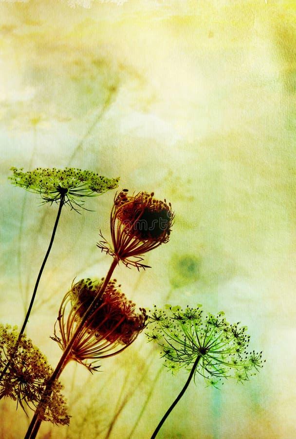 Flores salvajes   fotografía de archivo libre de regalías