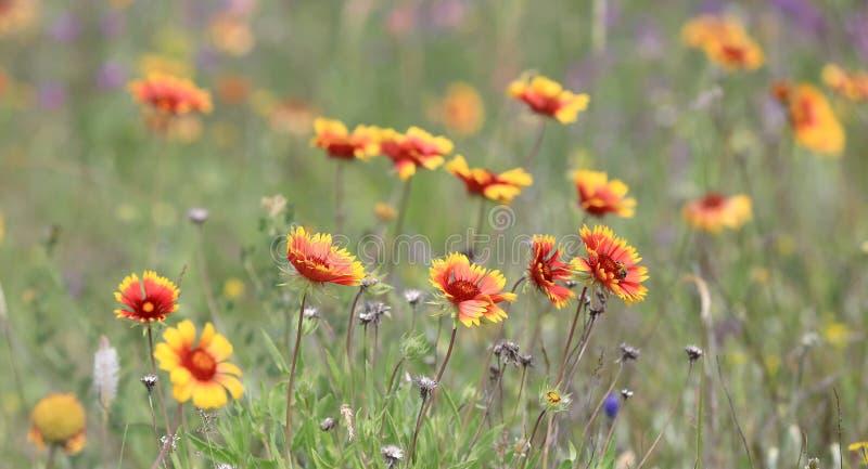 Flores salvajes agradables fotografía de archivo libre de regalías
