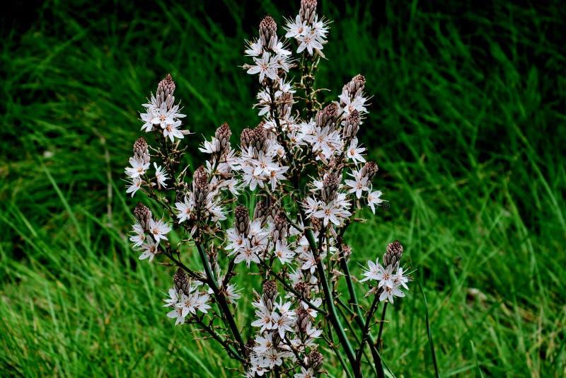 Flores salvajes blancas en el medio del bosque en la hierba verde foto de archivo