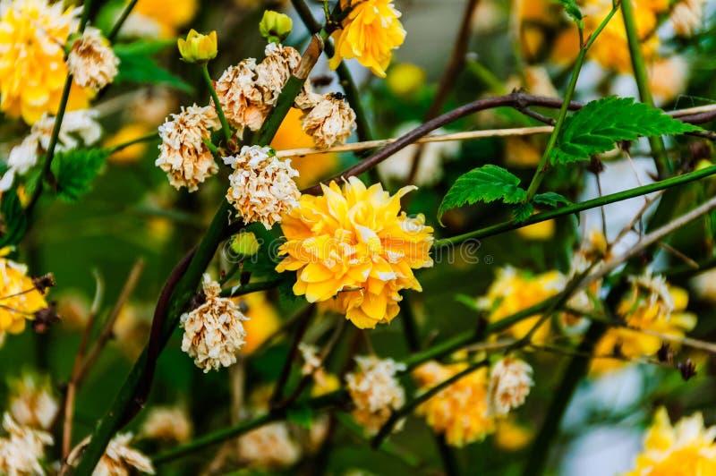 Flores salvajes con el fondo suave del foco imagenes de archivo