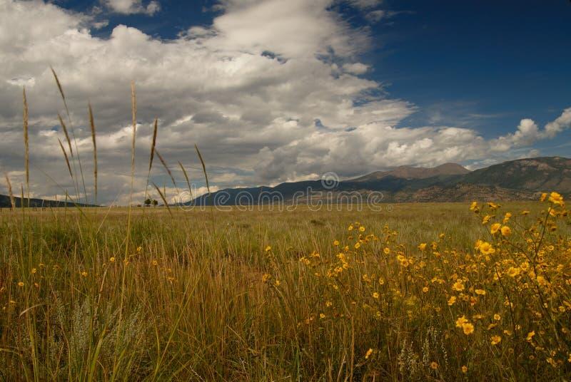 Flores salvajes de las hierbas salvajes fotos de archivo