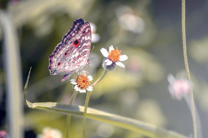 Flores salvajes del concepto en colores pastel de la naturaleza Fondo hermoso del prado de la mariposa y de las flores fotografía de archivo libre de regalías