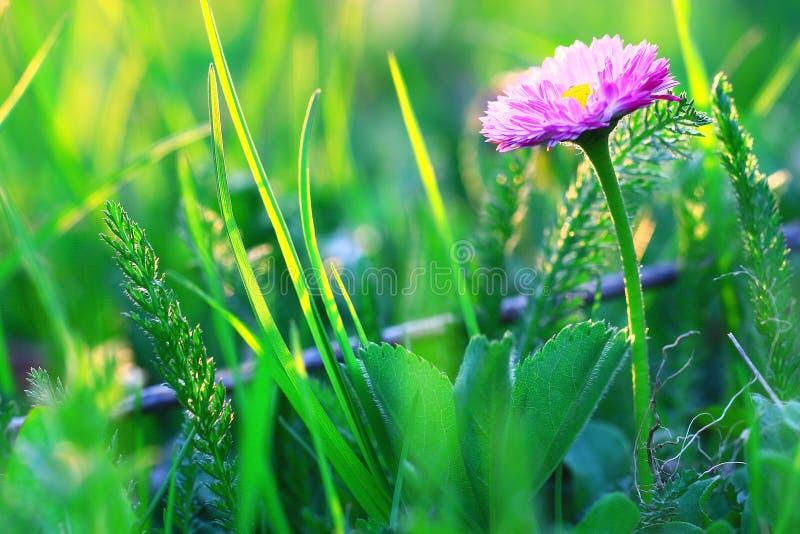 Flores salvajes del resorte foto de archivo libre de regalías