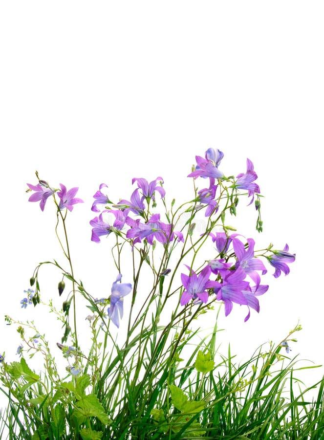 Flores salvajes e hierba imagen de archivo