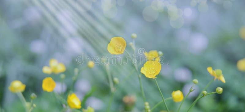 Flores salvajes en el prado en un día soleado claro La atmósfera del calor del verano, del aire fresco y de la pureza de la natur foto de archivo libre de regalías