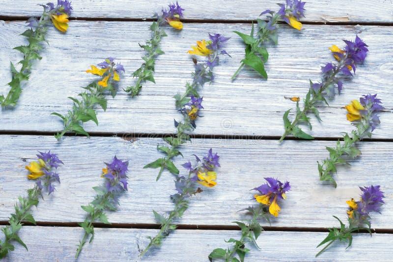 Flores salvajes en los tableros Fondo Ver imagen de archivo libre de regalías