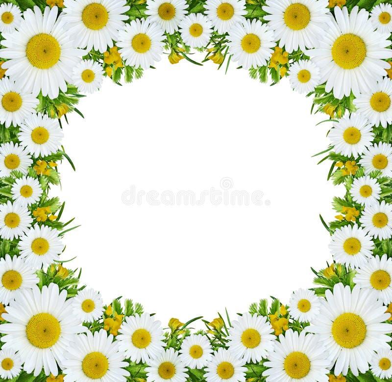 Flores salvajes en marco cuadrado imagen de archivo libre de regalías