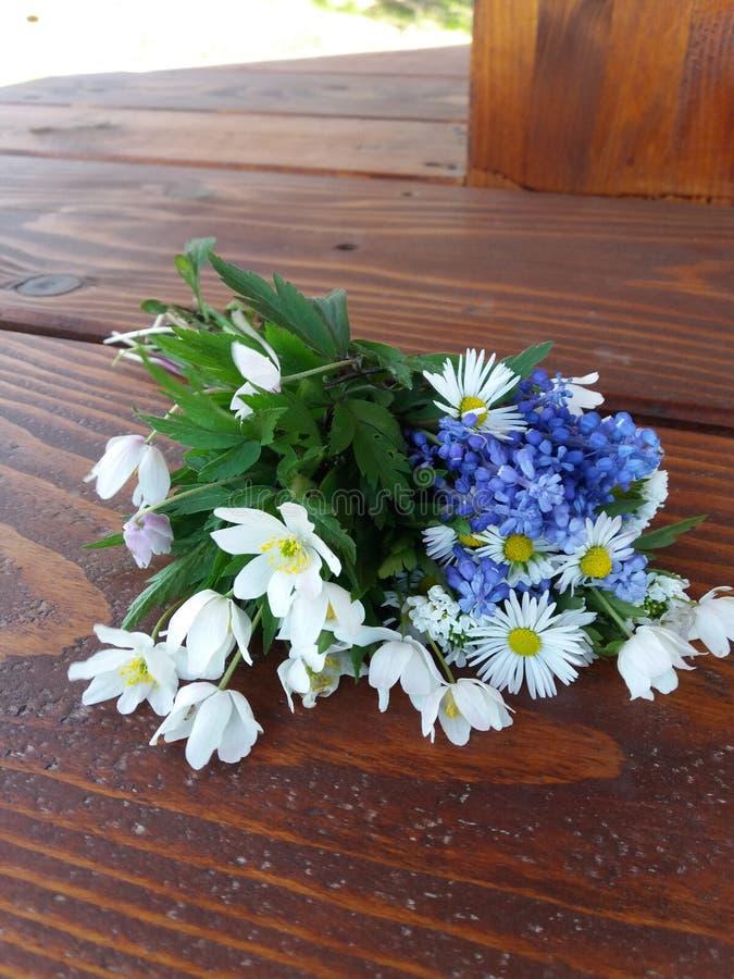 Flores salvajes en un banco de madera en primavera foto de archivo