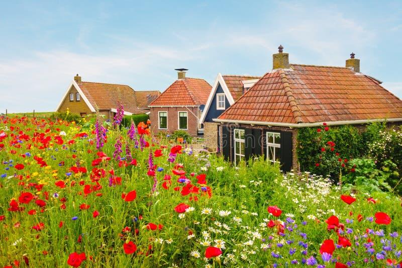Flores salvajes florecientes delante de casas holandesas foto de archivo libre de regalías