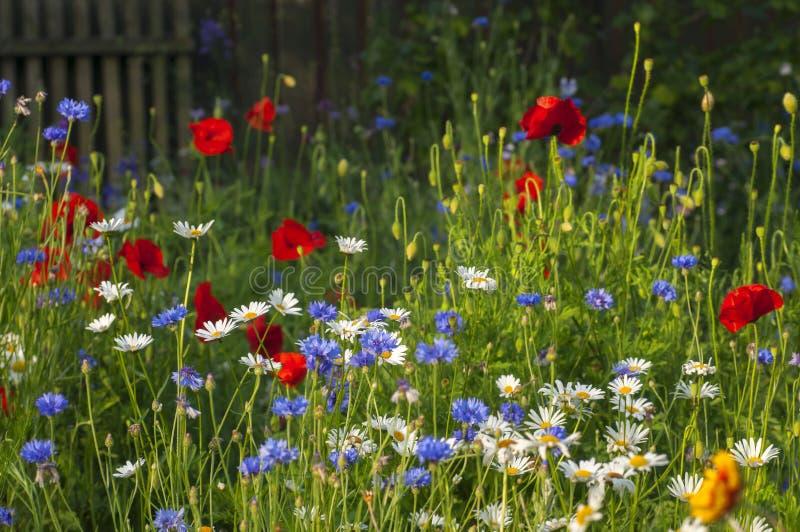 Flores salvajes florecientes en el prado en el verano foto de archivo