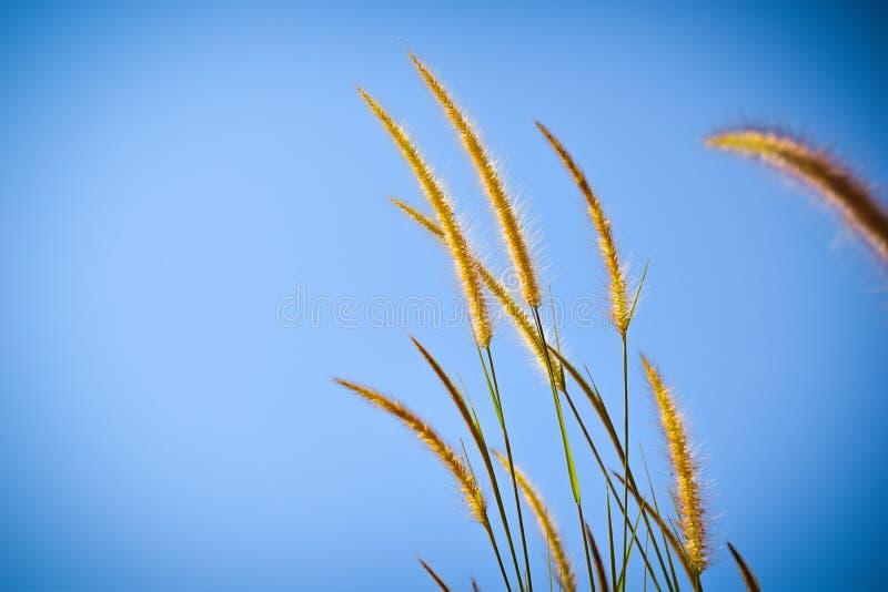 Flores salvajes hermosas en hierba del forestMission a lo largo del pantano en la puesta del sol fotos de archivo libres de regalías