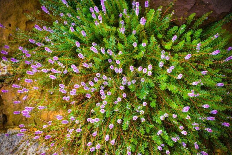 Flores salvajes hermosas en hierba del forestMission a lo largo del pantano en la puesta del sol imagen de archivo