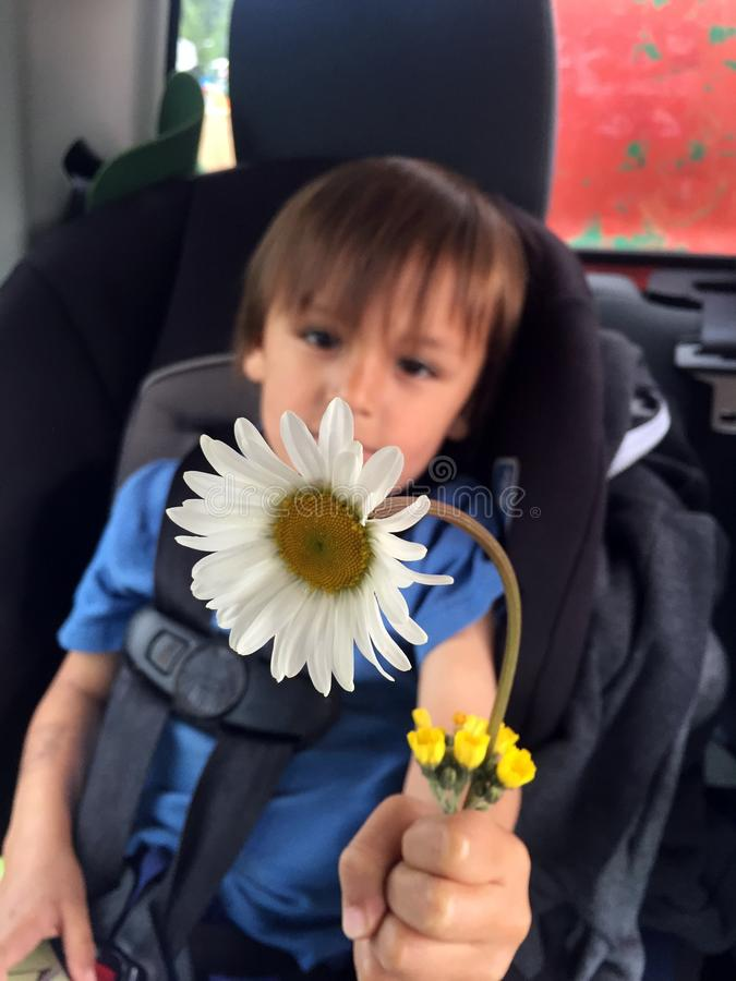 Flores salvajes para la abuela imagenes de archivo