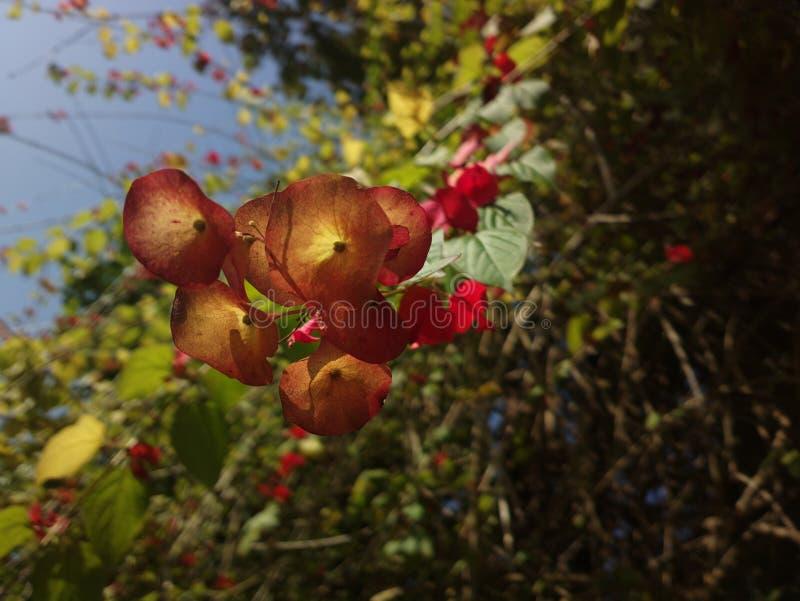 Flores salvajes que cuelgan abajo imagen de archivo