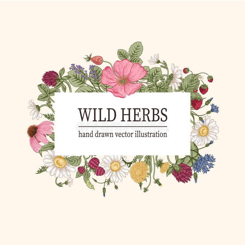 Flores salvajes T? herbario imágenes de archivo libres de regalías