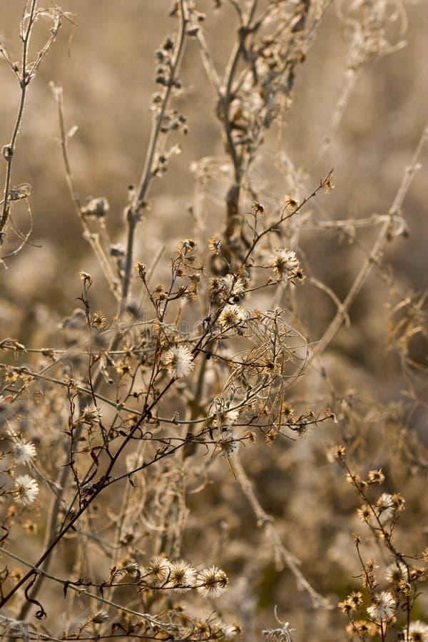 Flores salvajes y fauna foto de archivo