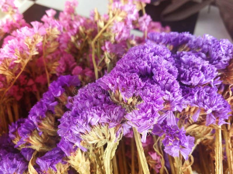 Flores secadas fotos de archivo libres de regalías
