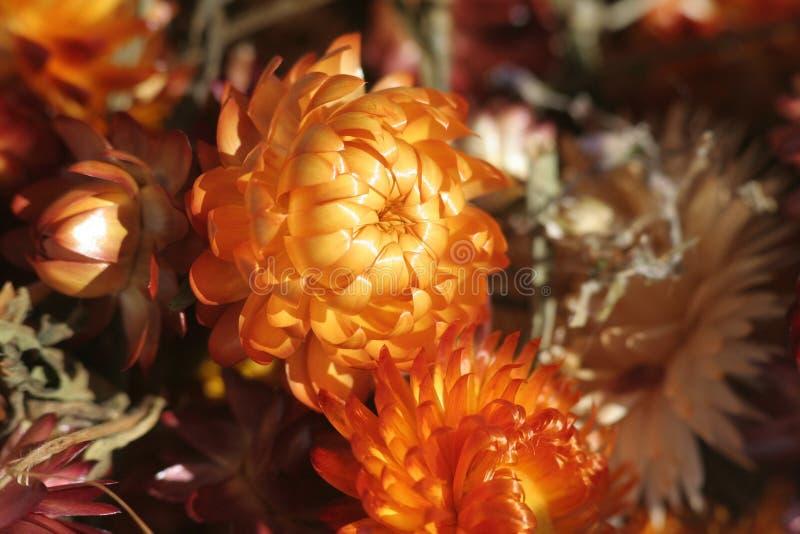 Download Flores secadas foto de archivo. Imagen de cono, secado - 1275388
