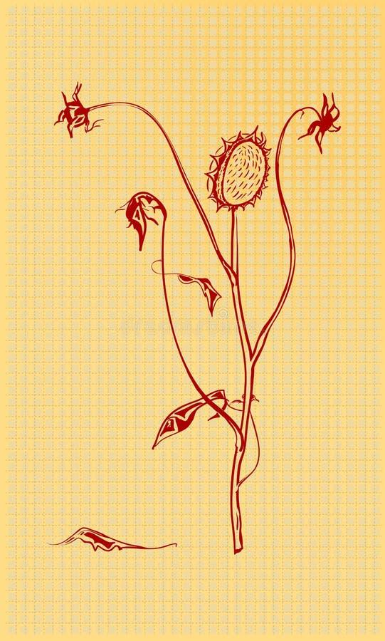 Flores secadas ilustración del vector