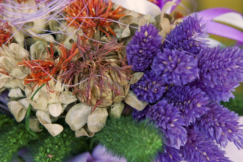 Flores secadas coloridas imagen de archivo