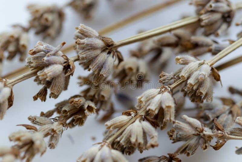 Flores secadas com alfazema dos ramos foto de stock