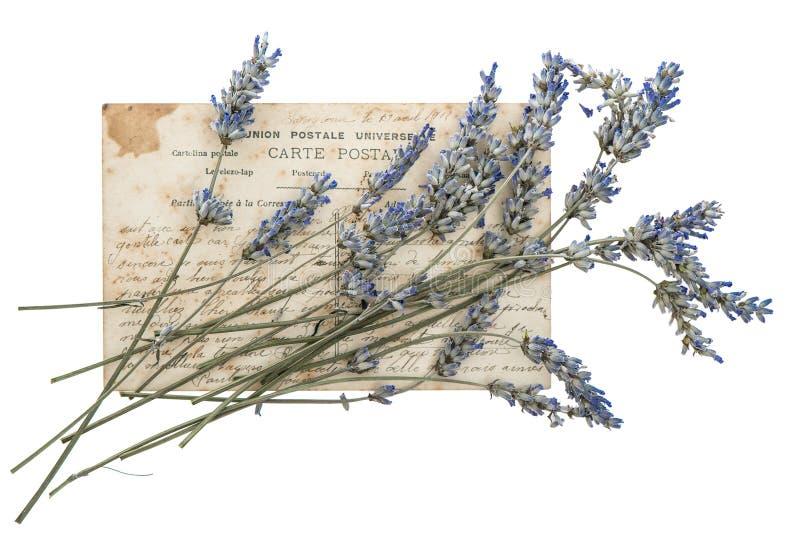 Flores secadas da alfazema e cartão velho imagens de stock