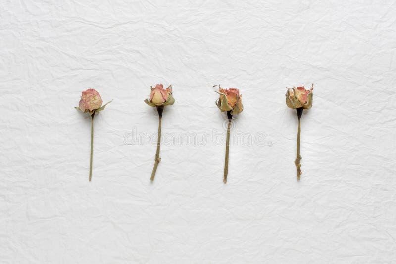 Flores secadas das rosas em um Livro Branco Cor-de-rosa amarelo imagens de stock royalty free