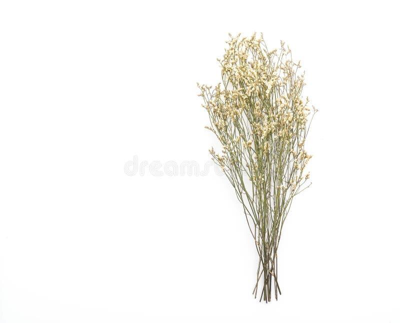 Flores secadas de Caspia imágenes de archivo libres de regalías