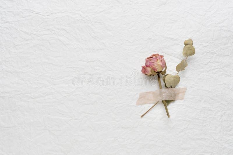 Flores secadas de rosas en un Libro Blanco Color de rosa amarillo imagenes de archivo