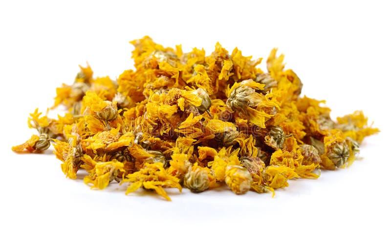Flores secadas del crisantemo aisladas en el fondo blanco fotos de archivo