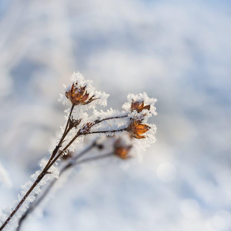 flores secadas en invierno imágenes de archivo libres de regalías