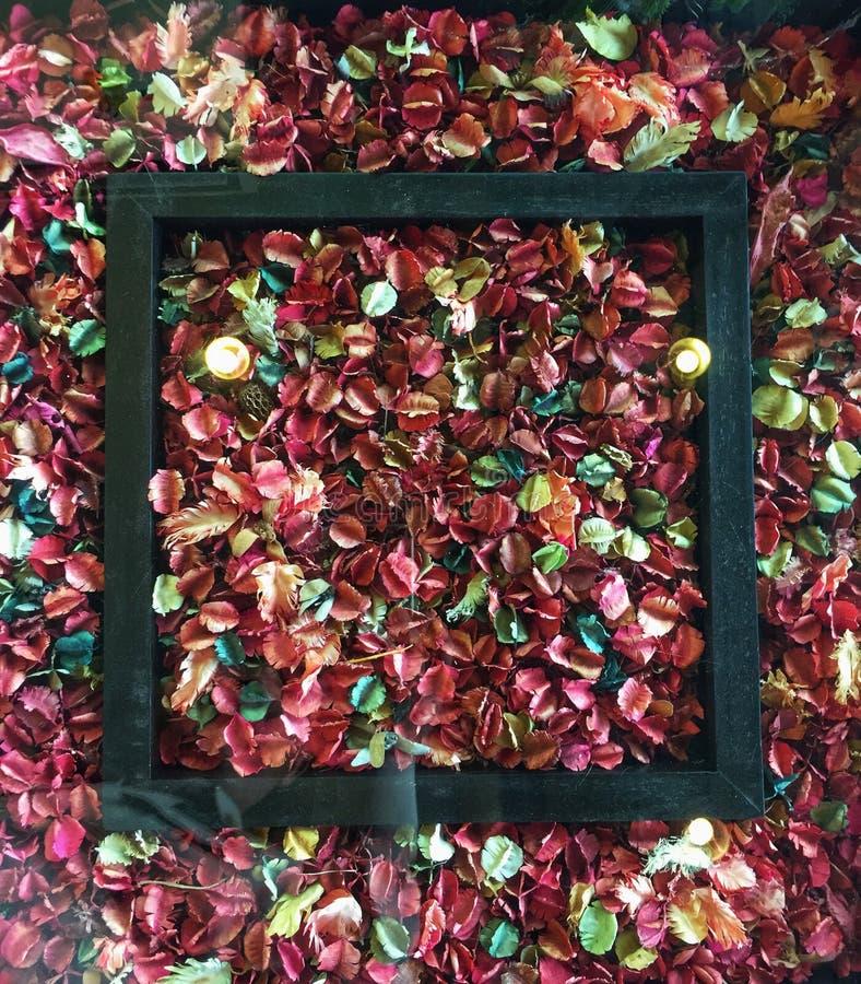 Flores secadas en un marco de madera fotos de archivo libres de regalías