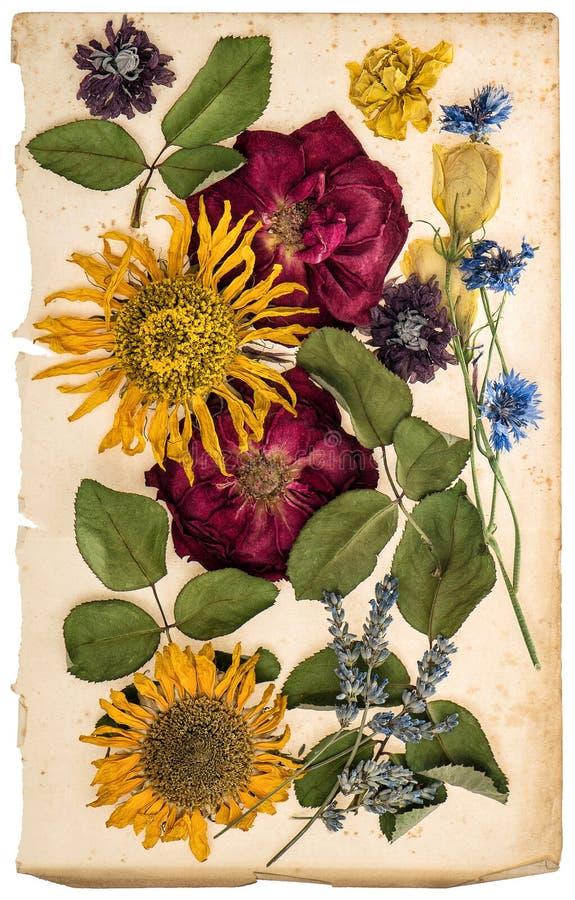 Flores secadas na folha de papel envelhecida Alfazema, rosas, girassóis foto de stock royalty free