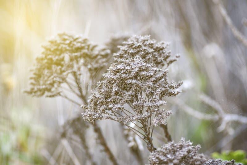Flores secadas selvagens em um prado no vintage e no estilo retro fotografia de stock royalty free