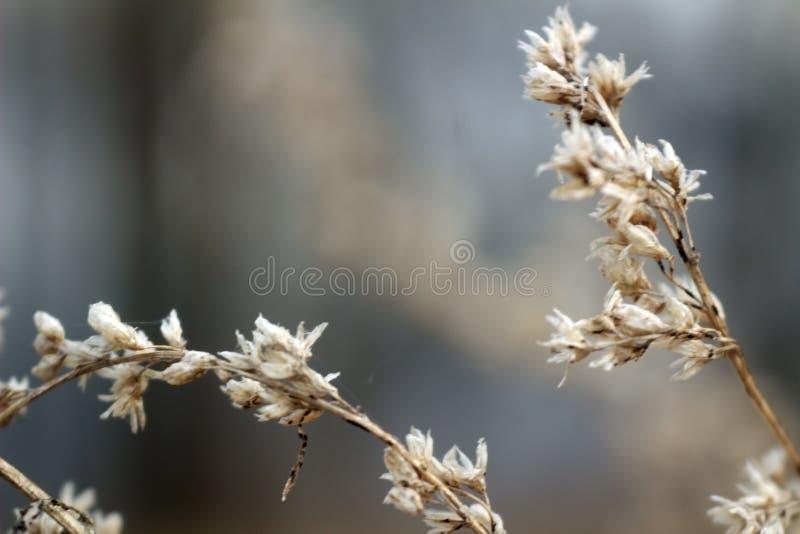 Flores secas de la foto macra en ramas marrones fotos de archivo
