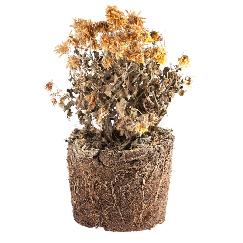 Flores secas en la tierra fotos de archivo libres de regalías