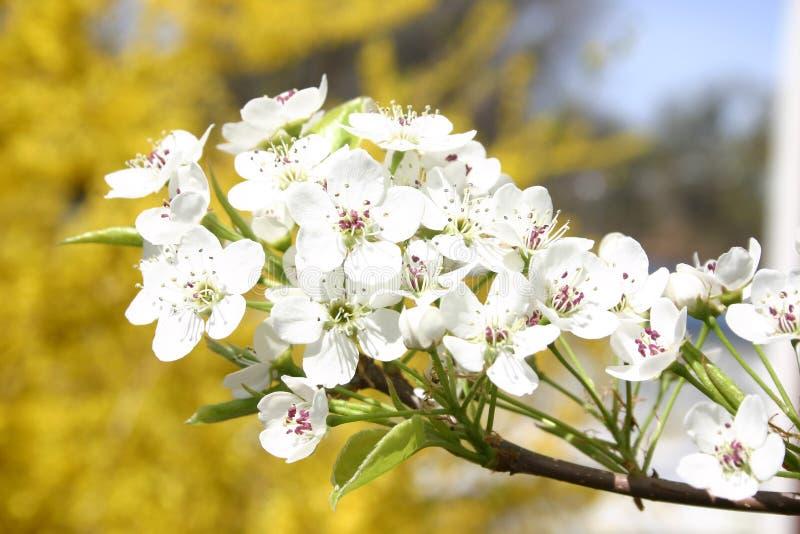 Download Flores selvagens foto de stock. Imagem de verão, pequeno - 69866