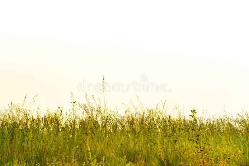 Flores selvagens, campo da palha e de grama e céu branco imagem de stock royalty free